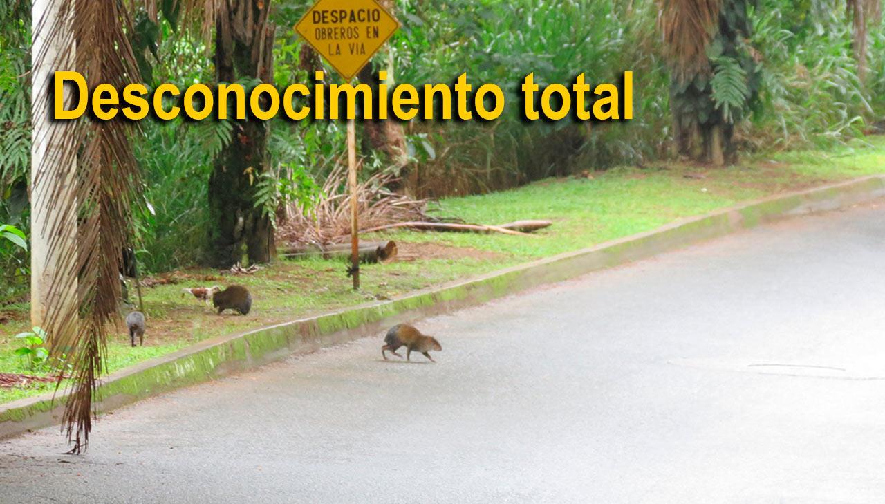 Ministerio de ambiente tome acciones noticias de cali for Bares ciudad jardin cali